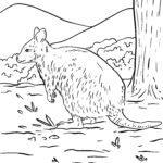 Ζωγραφική σελίδα καγκουρό quokka - ζώα