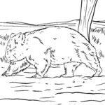 דף צביעה wombat