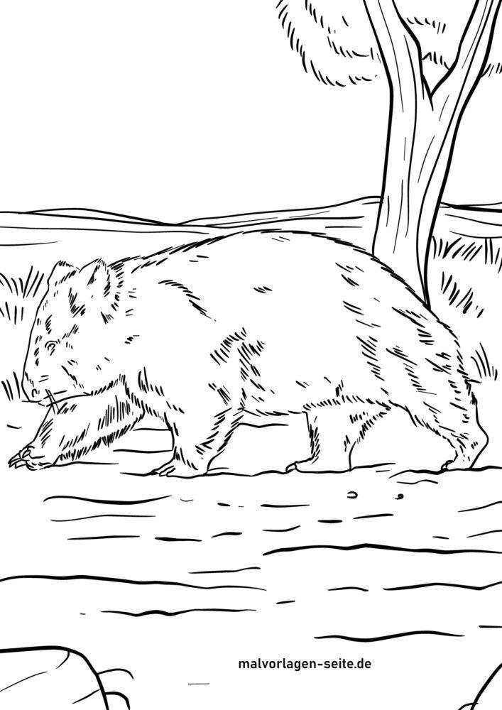 Malvorlage Wombat