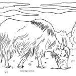 Pejy fandokoana yak - omby