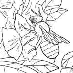 Dibujo para colorear abella
