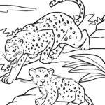 পৃষ্ঠা চিতাবাঘ - বড় বিড়াল