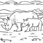 Rhinoceros - divoká zvířata omalovánky