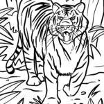Tygr - divoká zvířata omalovánky