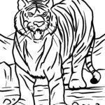 Coloriage tigre