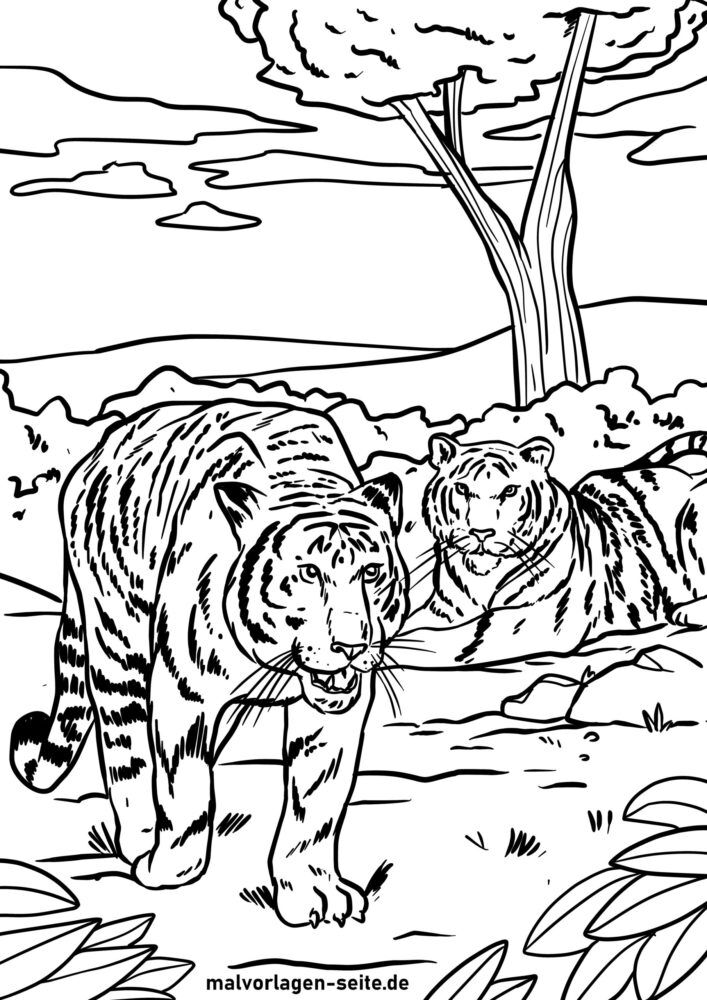 Mpivady tigra tigra