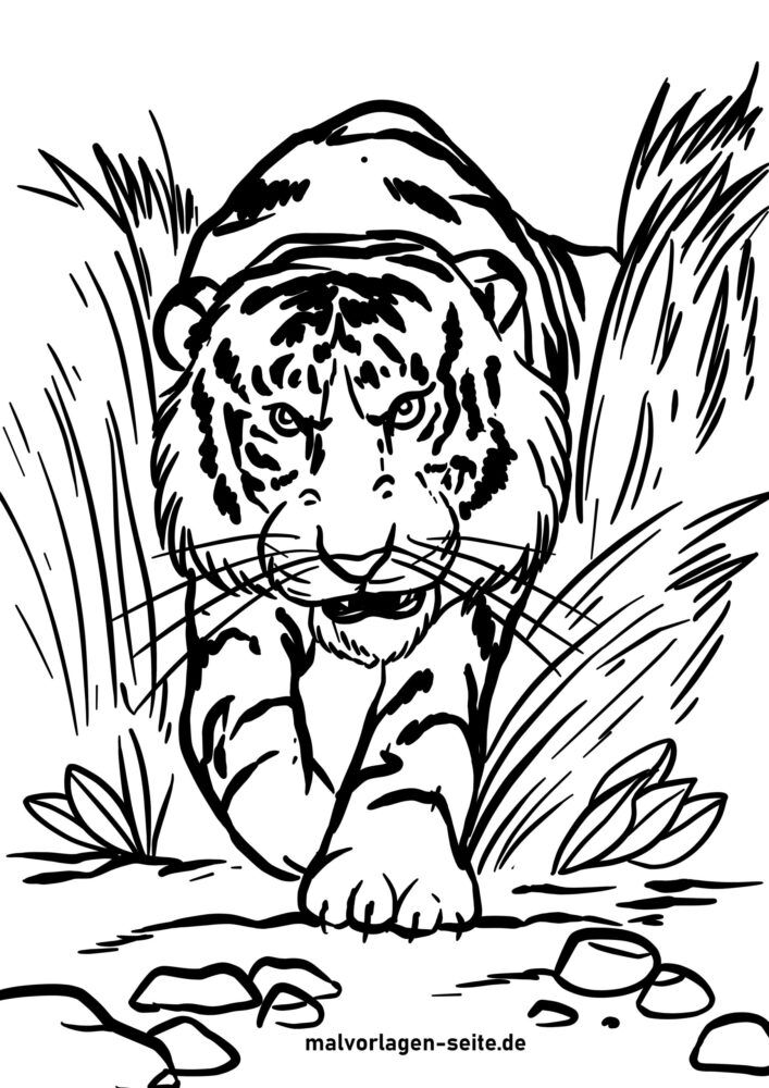 Páxina para colorear tigre