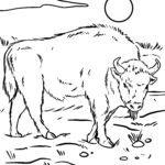 Boyama səhifəsi bizon - vəhşi heyvanlar bizon