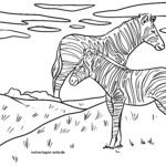 Зебри за оцветяване