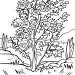 Disegno da colorare cespuglio di rose