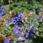Foto de abella