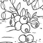 Blueberry pejy fandokoana - voankazo