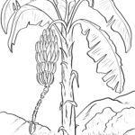 Páxina para colorear bananas - froitas