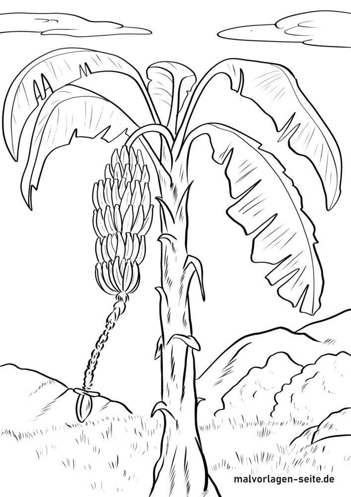 রঙিন পাতা কলা গাছ