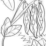 Страница за оцветяване боб - зеленчуци