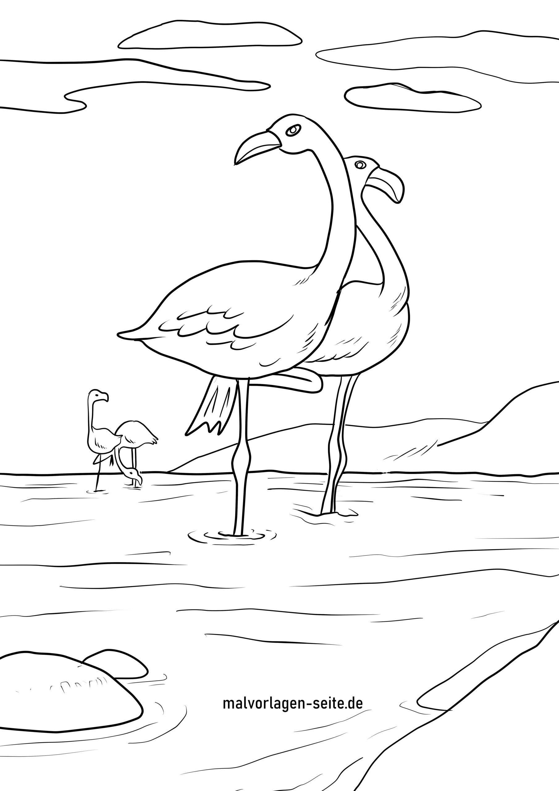 Tolle Malvorlage Flamingo - Vögel - Kostenlose Ausmalbilder