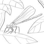 Ausmalbilder Libellen - Insekten