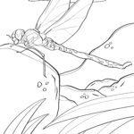Páxina para colorear libélula - insectos