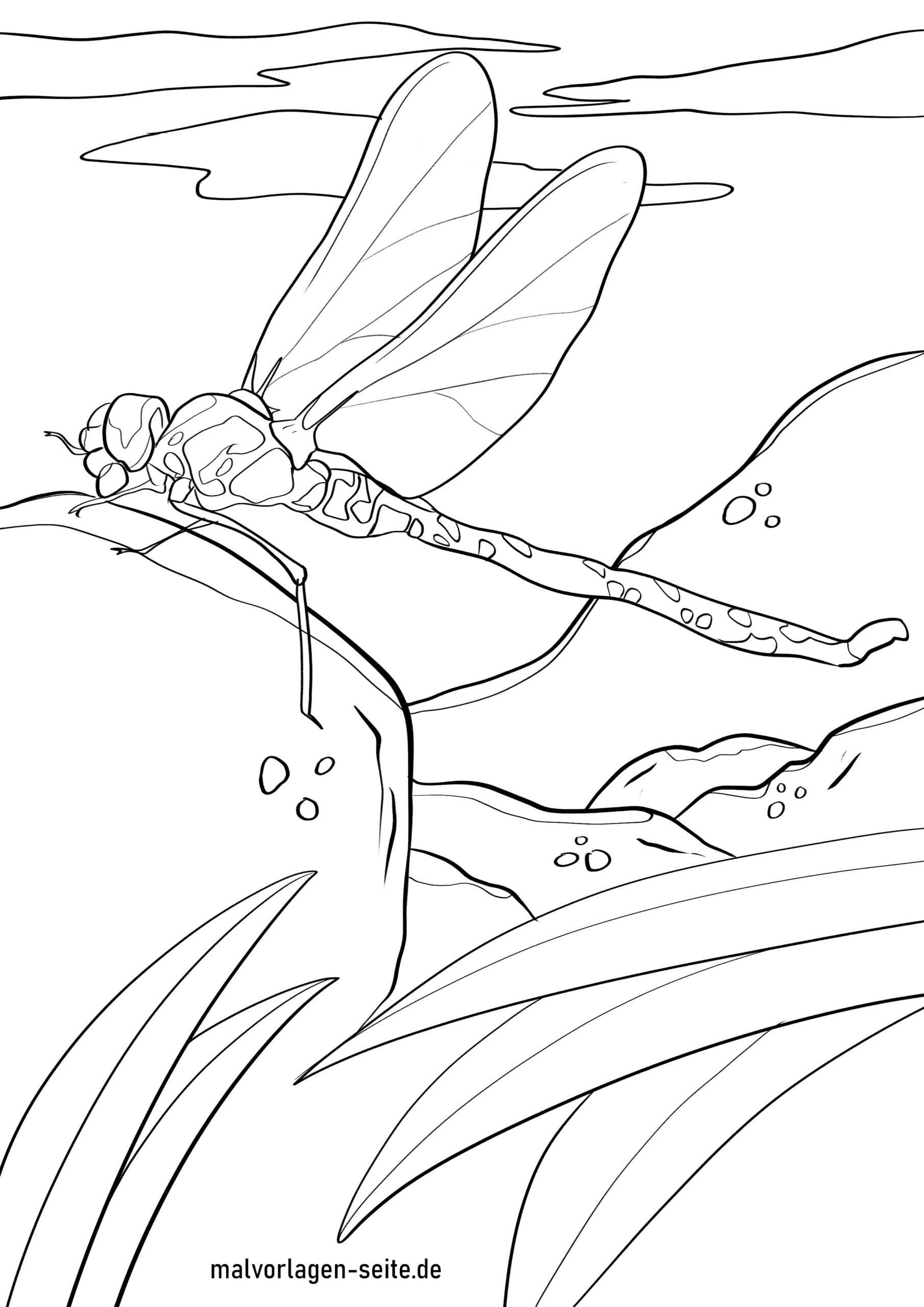 Tolle Malvorlage Libelle - Insekten - Kostenlose Ausmalbilder