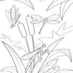 Páxina para colorear libélula