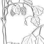 Malvorlage Weintrauben - Rebstock