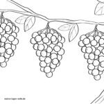 Mga kolor sa panid nga grapes - ubas