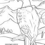 Águila para colorear
