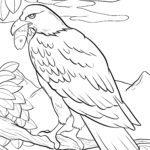 Páxina para colorear aguia pescadora - aguia