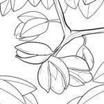 Mga panid sa kolor nga pistachios