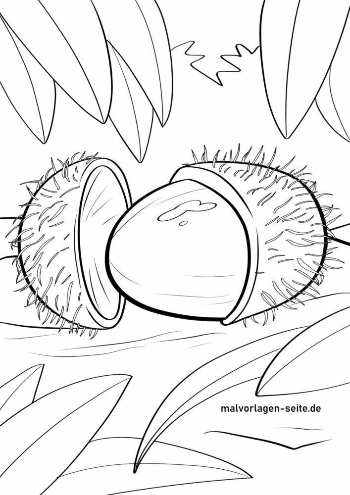 Malvorlage Rambutan