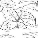 Рубарб парағын бояу