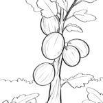Colouring gooseberries duilleag