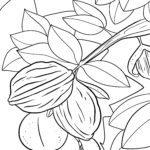 Оцветяване страница орехи - ядки