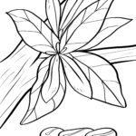 Malvorlage Kaffepflanze mit Kaffeebohnen