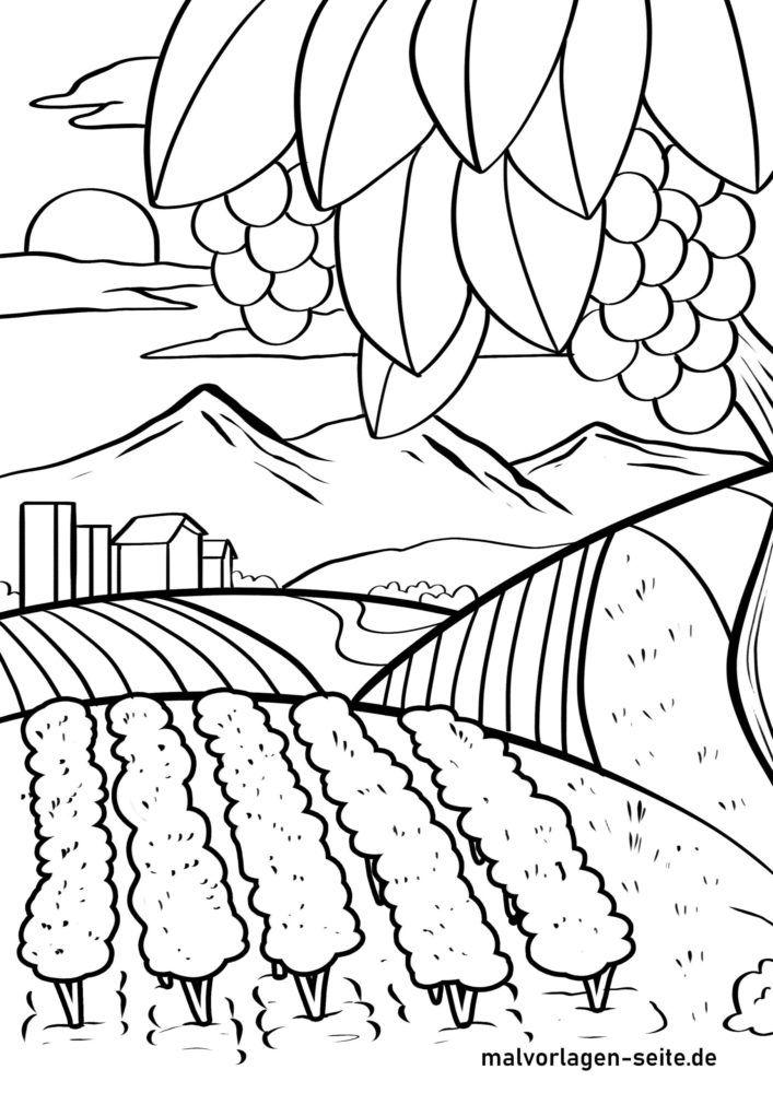 Раскраска виноградник