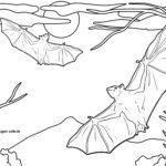 Размалёўка кажаноў